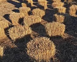 grass pruning
